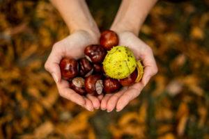 Recetas deliciosas para la temporada de otoño